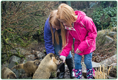 Animal experiences testimonials