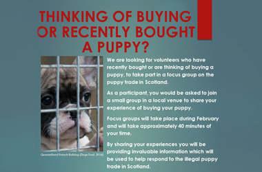 poster about illegal puppy trade created as part of Scottish Government research on sourcing pet dogs from illegal importation and puppy farms