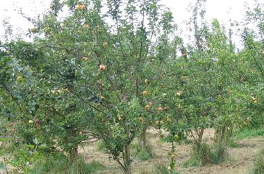 Photo Credit: Apple Harvest, Janice Clelland